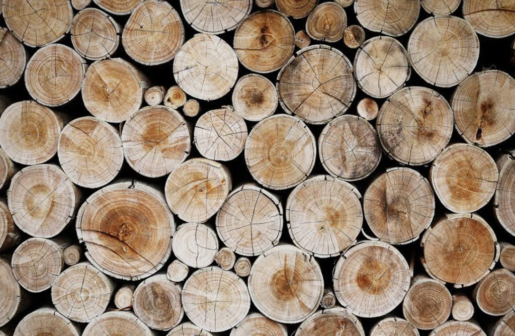 Фотообои Вид на срез дерева