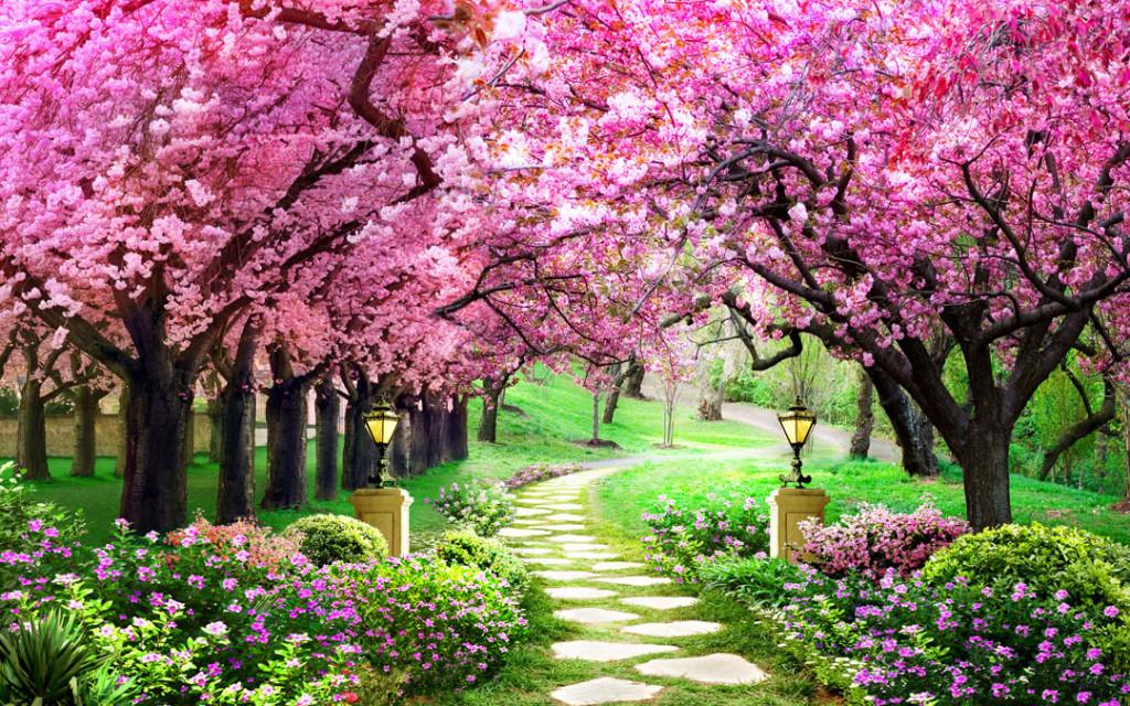 Фотообои Цветущие деревья в саду