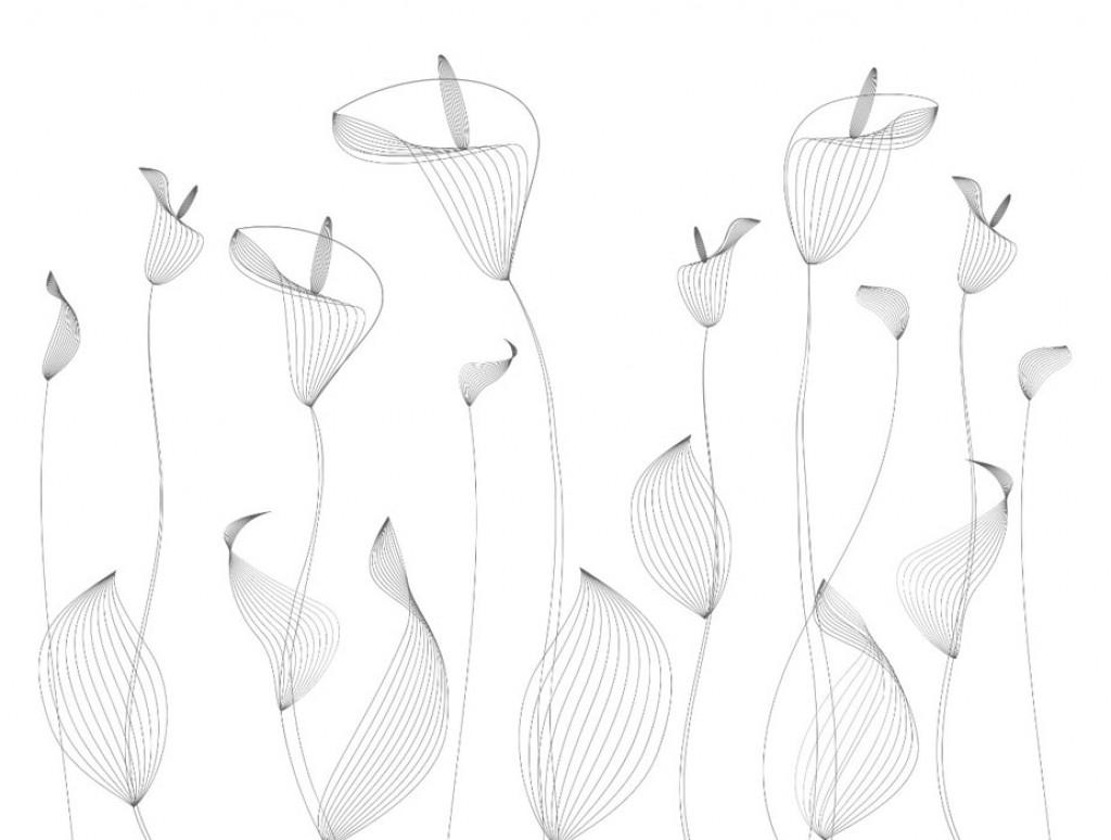 Фотообои  цветы  на белом фоне