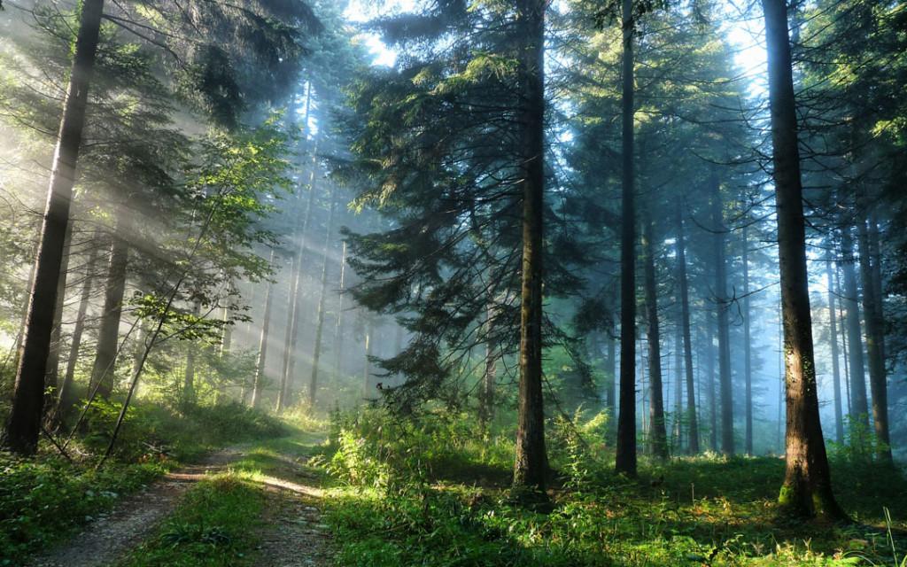 Фотообои Солнечный лес