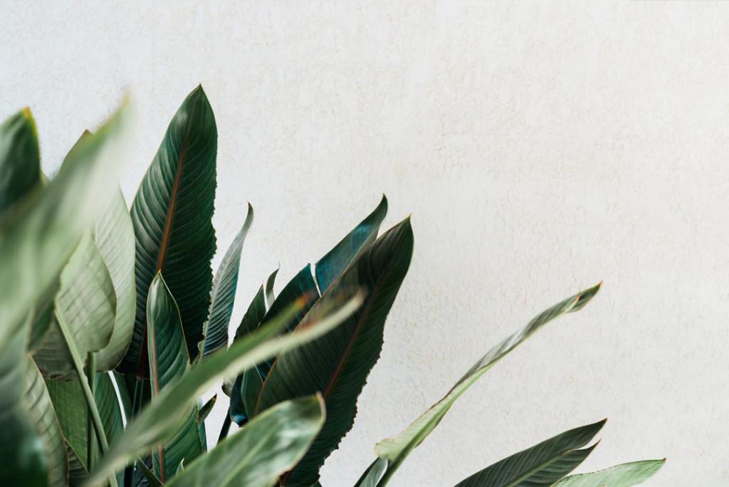 Фотообои Листья джунглей