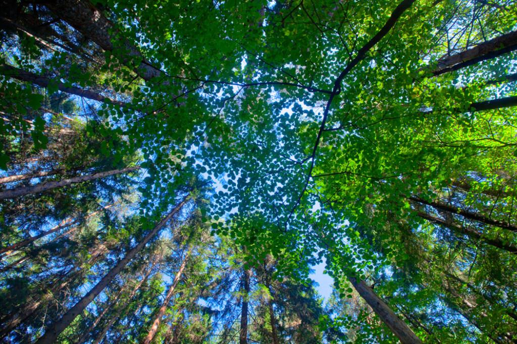 Фотообои Лес на потолок