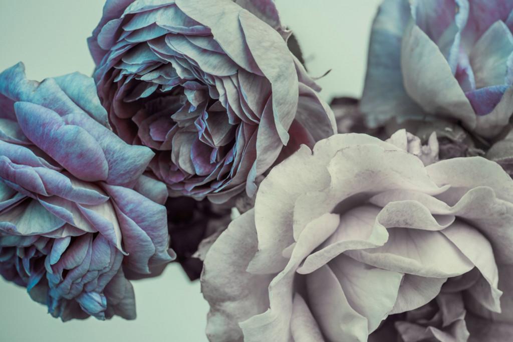Фотообои дизайнерские цветы
