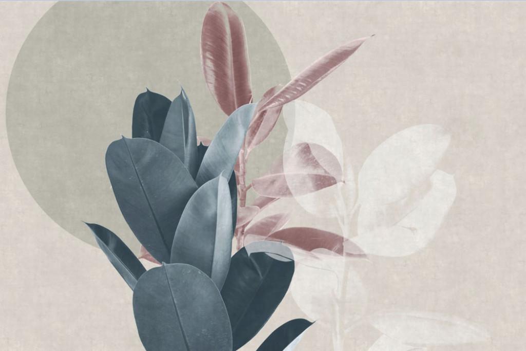 Фотообои Листья фикуса