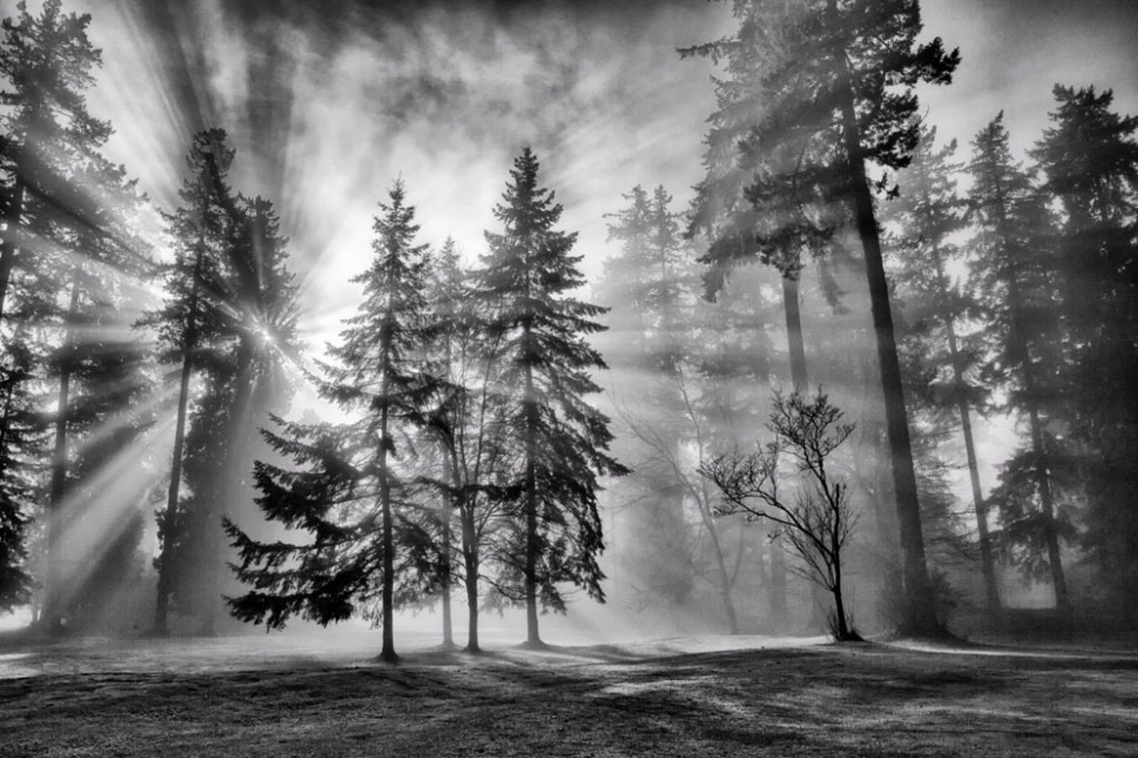 Фотообои Лучи солнца в лесу