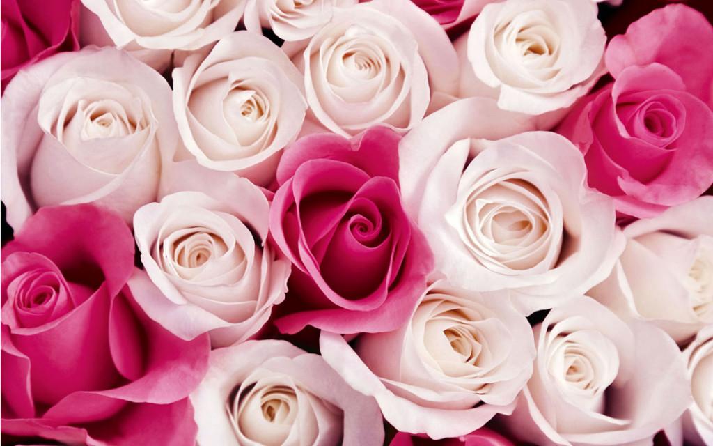 Фотообои Белые и красные розы