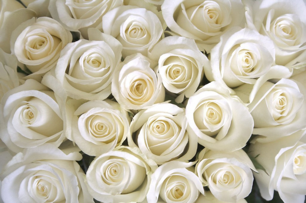 Фотообои Букет белых роз