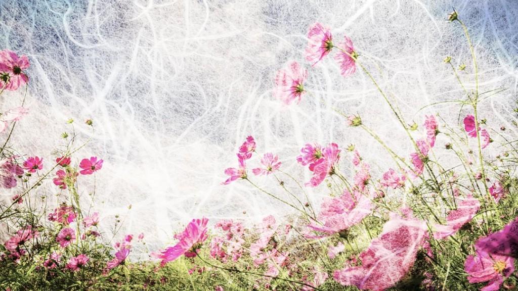 Фотообои Красивые маки
