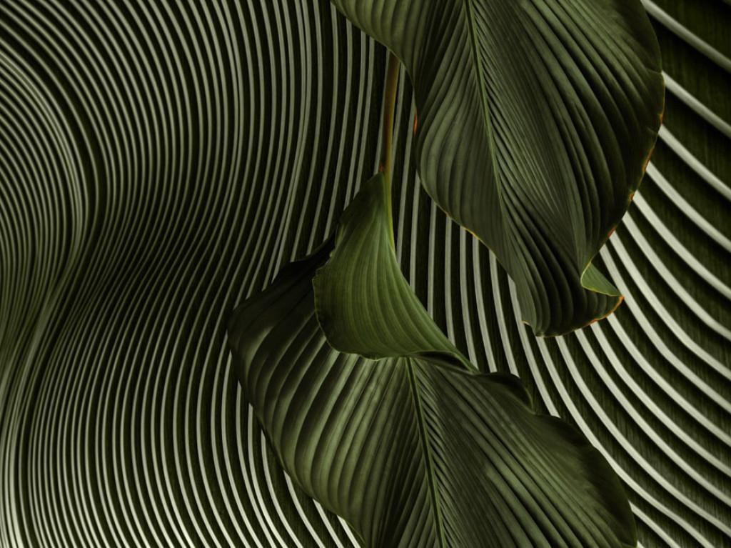Фотообои 3д тропические листья