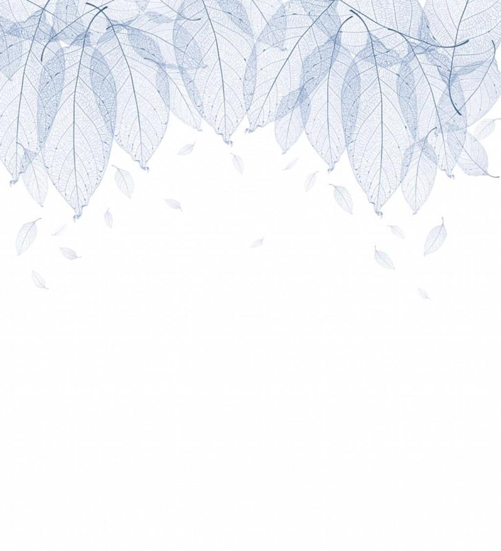 Фотообои Синие листья н белом фоне