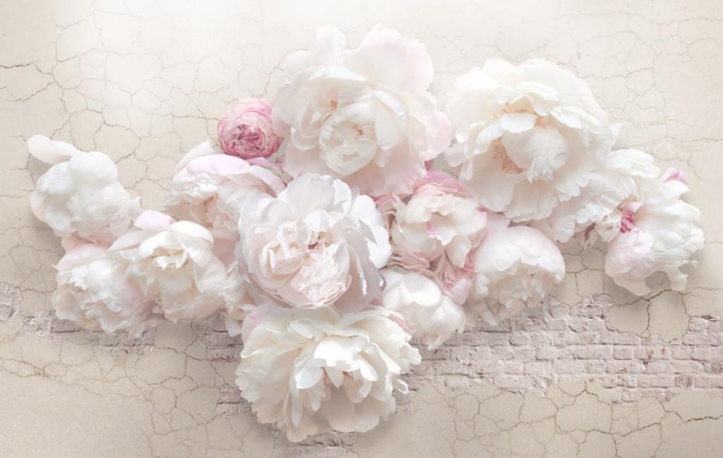 Фотообои Розовые нежные пионы