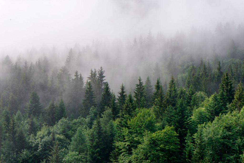 Фотообои Зелёный туманный лес