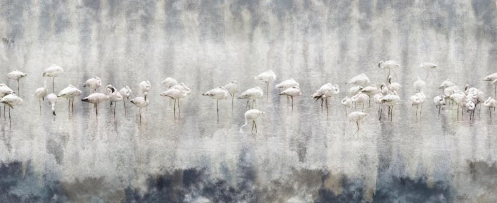Фотообои Фламинго в тумане