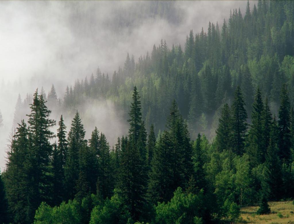 Фотообои Зеленый лес в тумане