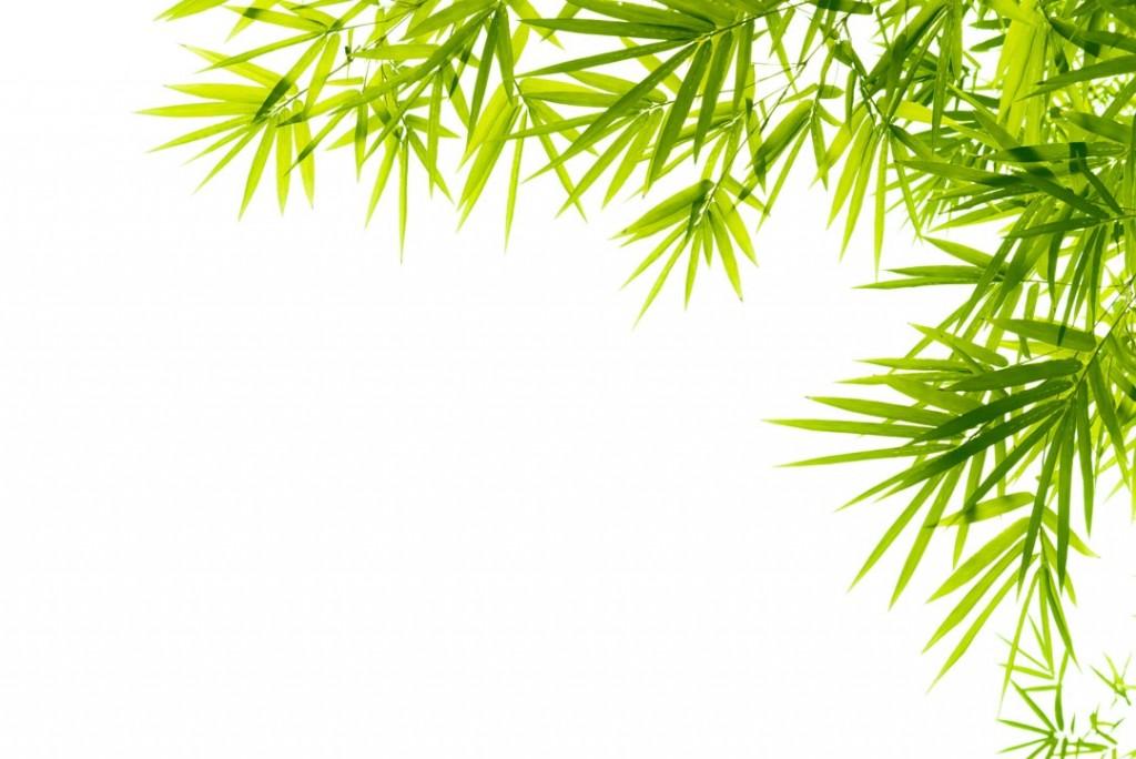 Фотообои Листья бамбука