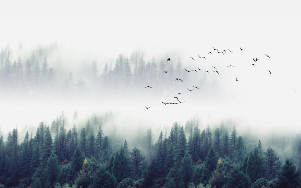 Фотообои Птицы в туманном лесу