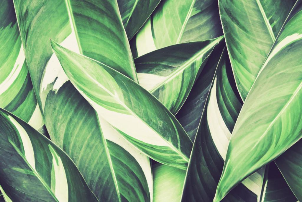 Фотообои Зеленые тропические листья