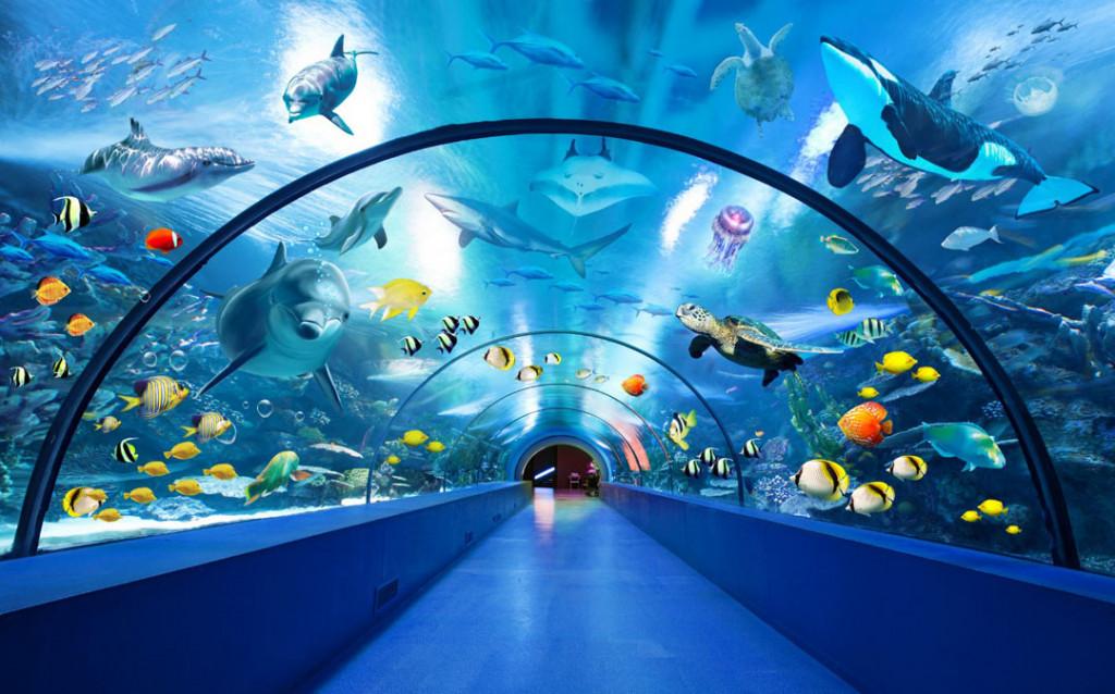 Фотообои Расширяющий аквариум