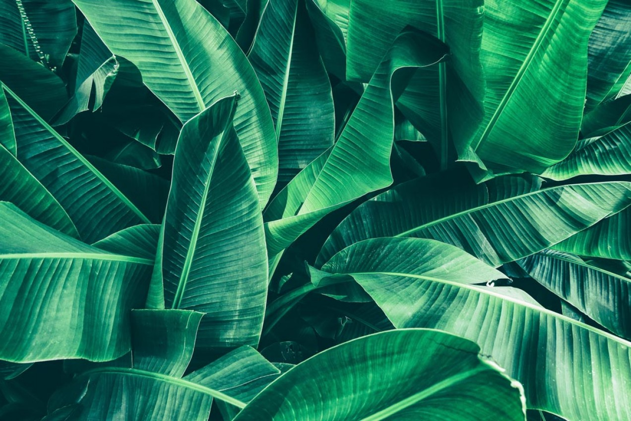 Фотообои Тропические листья с эфектом