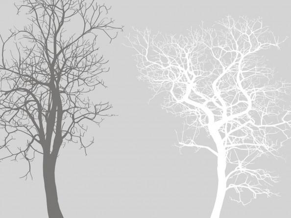 Фотообои деревья