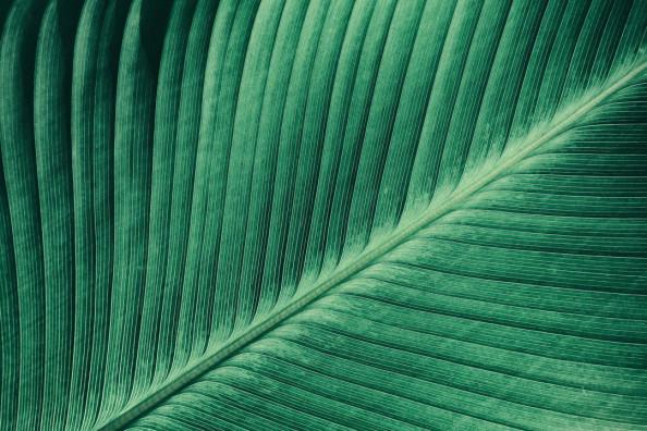 Фотообои Зеленый листик