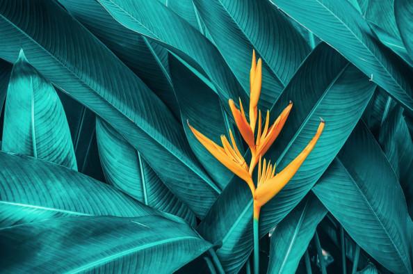 Фотообои Тропическая зелень