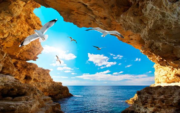 Фотообои Ущелье с птицами