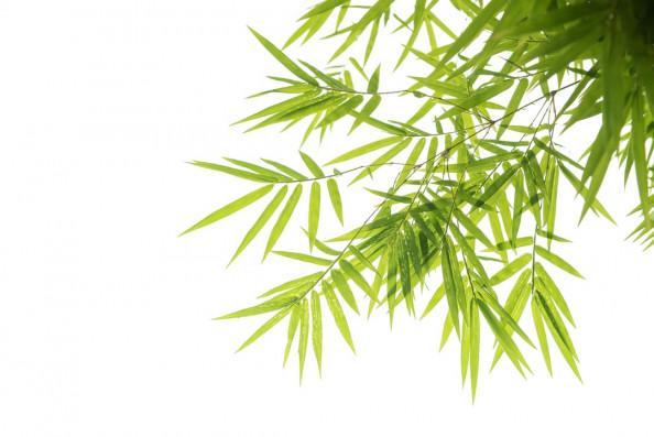 Фотообои Зеленые листья бамбука