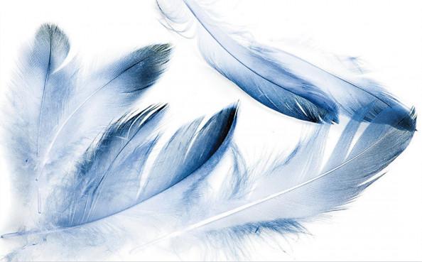 Фотообои Голубые перья
