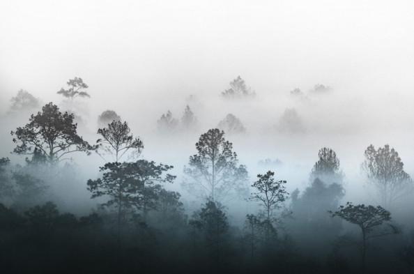 Фотообои Деревья в тумане