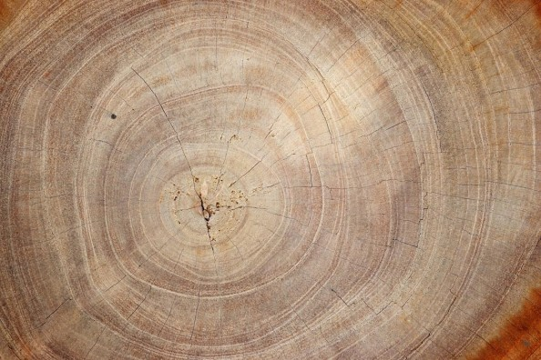 Фотообои Жизнь дерева
