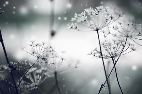 Фотообои Черно-белые цвет укропа