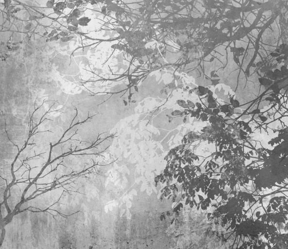 Фотообои фактура с деревьями
