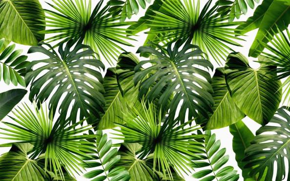 Фотообои Листья тропиков