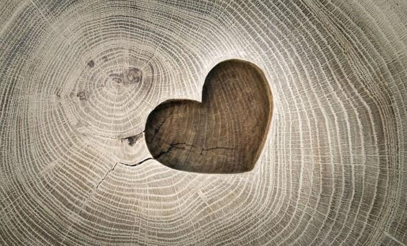 Фотообои Сердце на срезе дерева