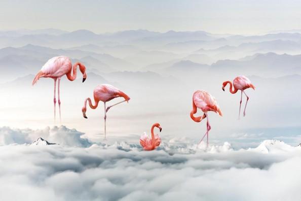 Фотообои Фламинго на фоне гор