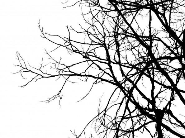 Фотообои ветви