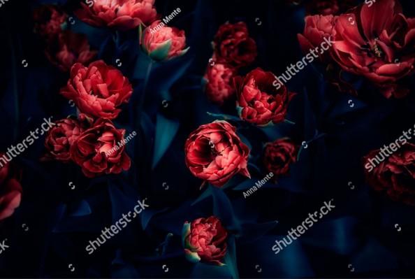 Фотообои  Красные пионы