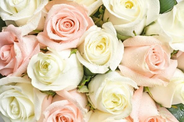 Фотообои Красивые розы