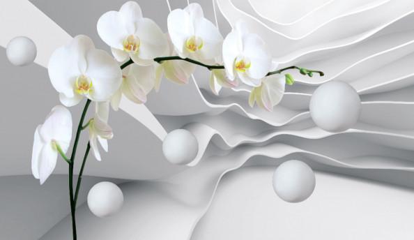 Фотообои орхидеи