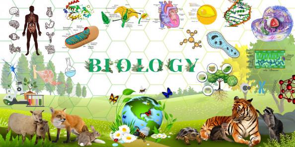 Фотообои в кабинет биологии