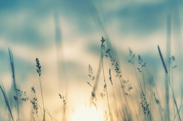 Фотообои Сухоцветы скандинавские