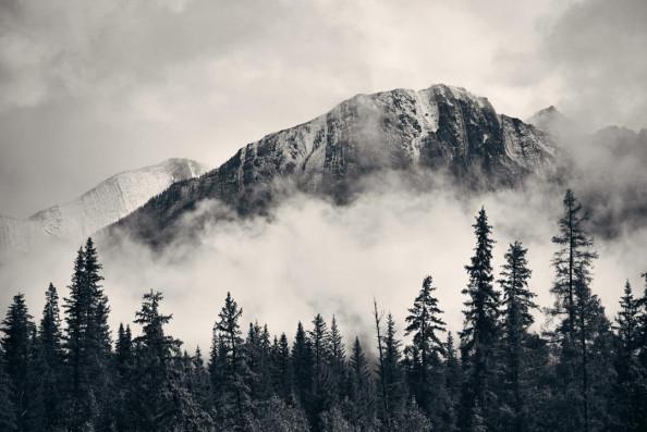 Фотообои Лес в тумане в сером цвете