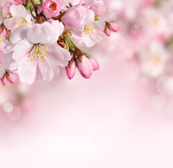 Фотообои Цветущая вишня