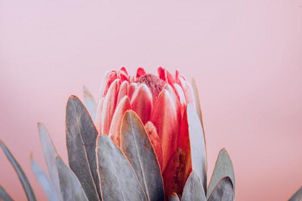 Фотообои Красивый цветок
