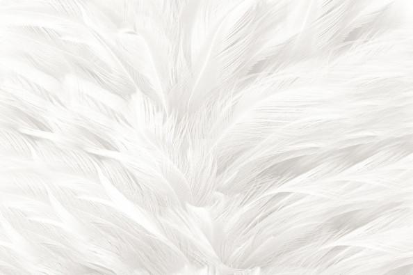 Фотообои белое перья