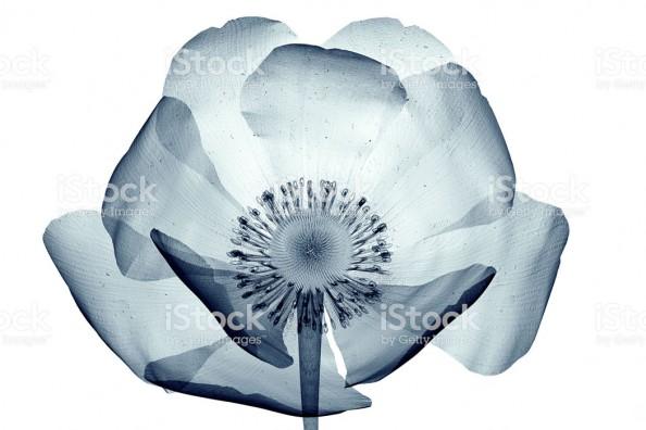 Фотообои  Цветок