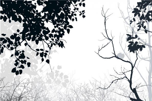 Фотообои Ветви ч\б
