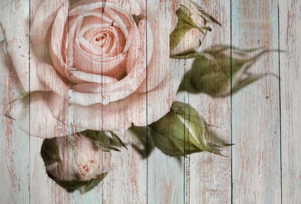 Фотообои Роза на фоне досок