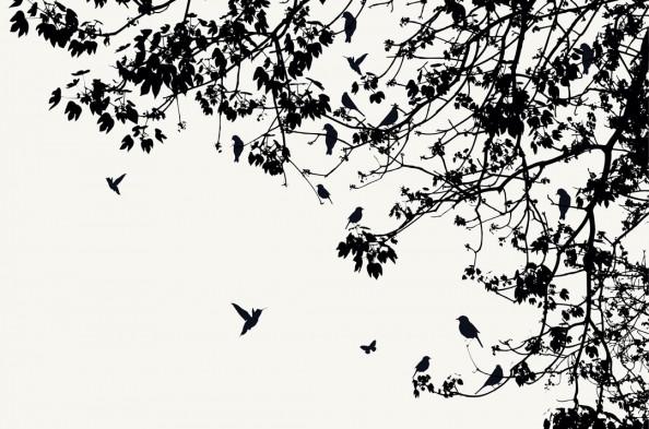 Фотообои Птицы на ветках